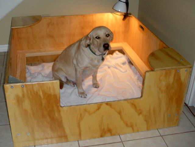Needing Info On Whelping Puppies German Shepherd Dog Forums